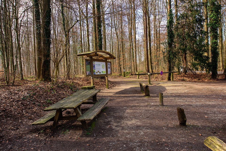 hallerbos picknicktafel parking 8 achtdreven