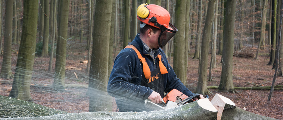 hallerbos houtverkoop