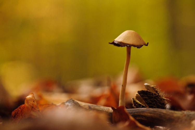 hallerbos herfst