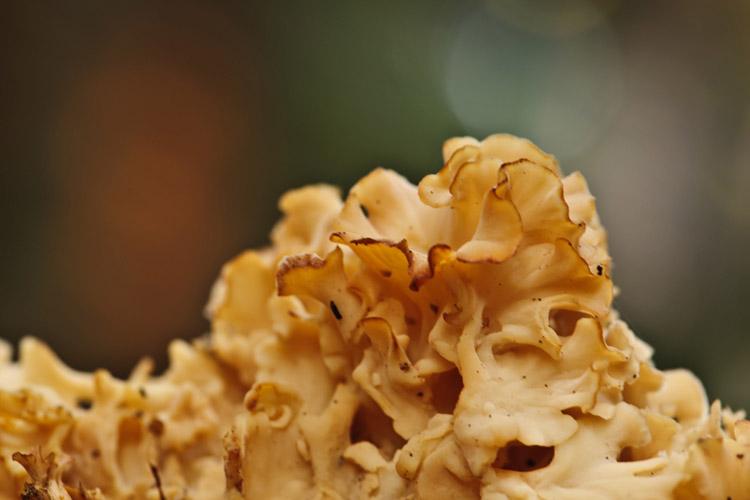 hallerbos herfst grote sponszwam