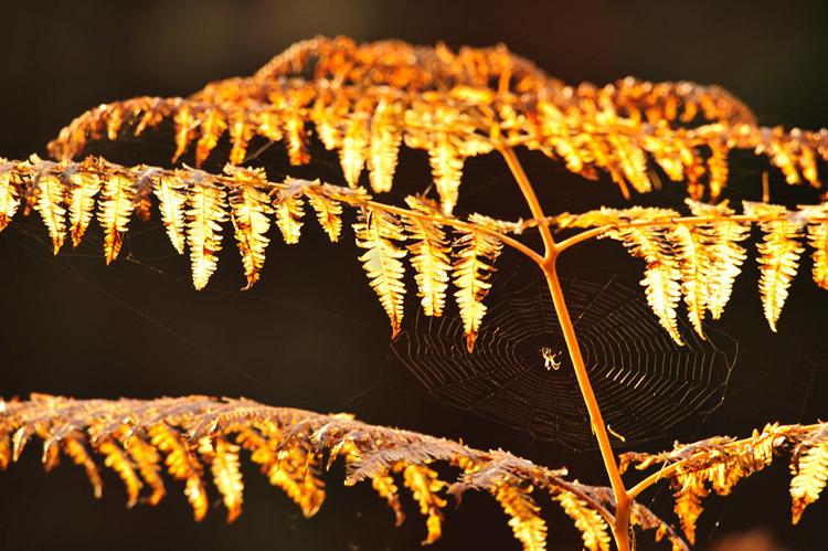 hallerbos herfst adelaarsvaren
