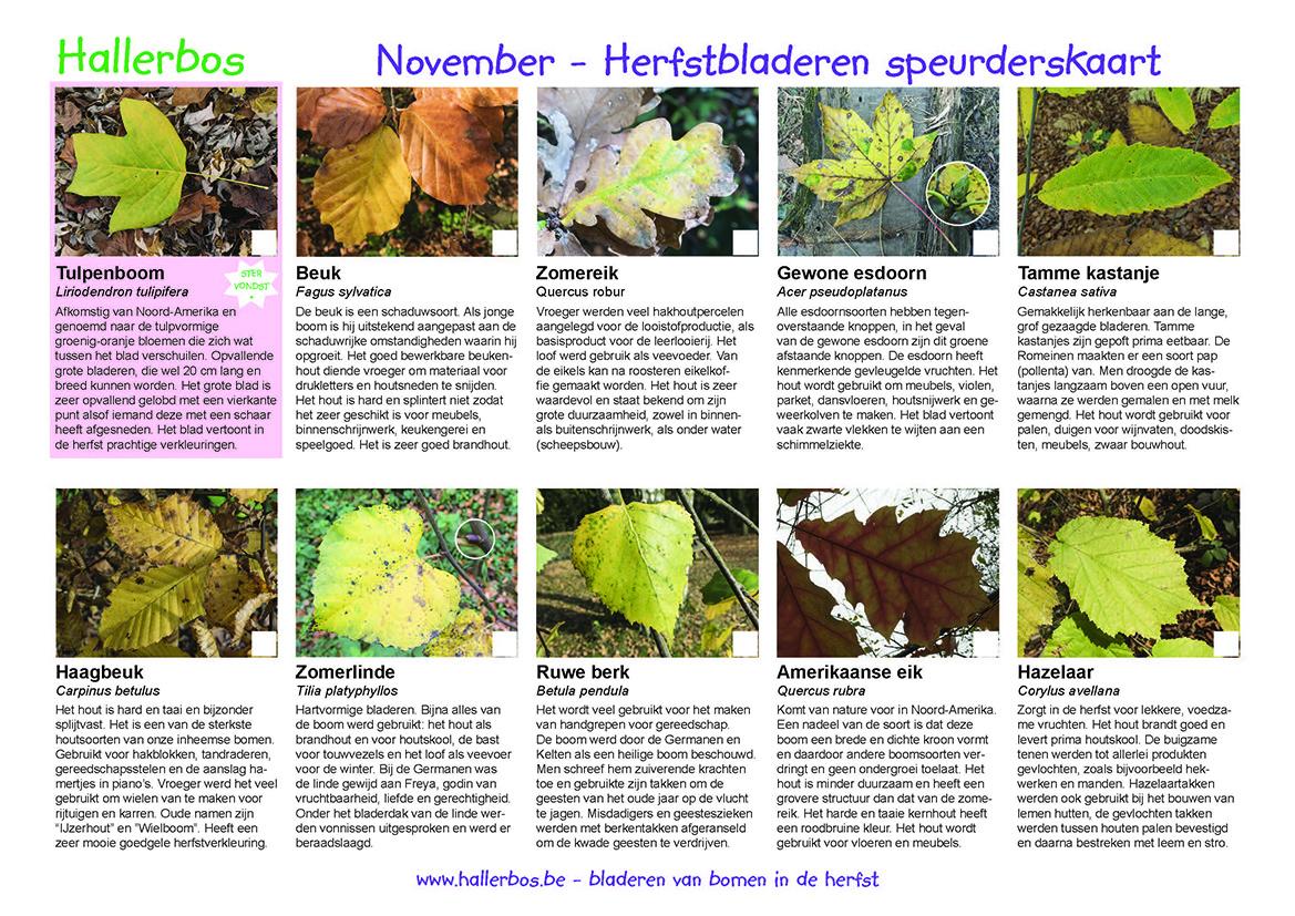 Speurderskaart herfstbladeren
