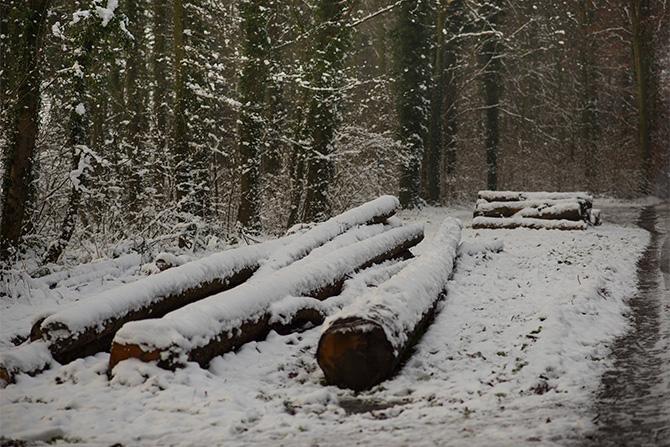 hallerbos winter